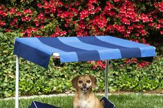 How to Build an Outdoor Dog Bed - This Old House Outdoor Dog Bed, Canopy Outdoor, Outside Dog Bed, Mattress World, Elevated Dog Bed, Diy Dog Bed, Diy Canopy, Dog Runs, Diy Stuffed Animals