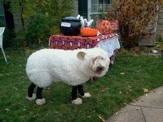 The 'full' costume - Emma the Sheepdog!