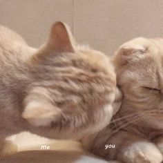 Cute Kittens, Cute Baby Cats, Cute Little Animals, Cats And Kittens, Cat Couple, Cat Icon, Photo Chat, Cat Aesthetic, Cat Wallpaper