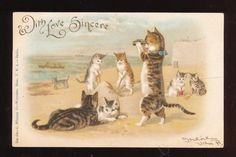 Vintage  ANTHROPOMORPHIC CAT kittens with BINOCULARS AT BEACH postcard-ttt143