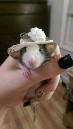 20 Pets All Dressed Up For Dress Up Your Pet Day - World's largest collection of cat memes and other animals Animals And Pets, Baby Animals, Funny Animals, Cute Animals, Strange Animals, Baby Owls, Cute Creatures, Beautiful Creatures, Animals Beautiful
