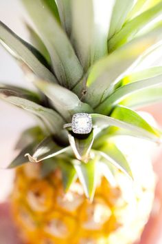 Love smells like pineapples. Simply sweet. Capture your Ko Olina wedding. Photos by #FSOahu recommended Photographer I Ashley Goodwin