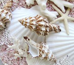 Rare and beautiful sea shells composition