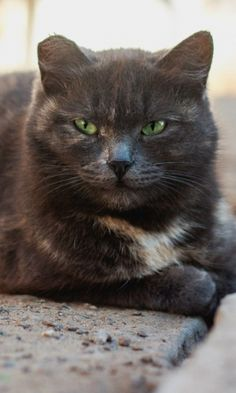 480x800 Wallpaper cat, homeless, spotted