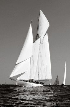 viatalium:Love these old style schooners with huge sail area and sleek lines.