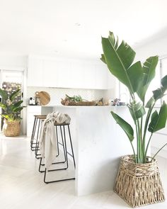 :: Coastal Home Decor Pins 103 :: - Modern coastal kitchen with palms in the space to bring a fresh look La mejor imagen sobre diy para - Home Decor Kitchen, Interior Design Kitchen, Modern Interior Design, Home Kitchens, Kitchen Plants, Modern Kitchens, Feng Shui Interior Design, Coastal Kitchens, Interior Design Plants