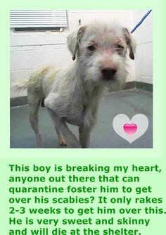 PETER (A1674963) I am a male white and tan Terrier mix. The shelter staff think I am about 4 years old and I weigh 17 pounds. I was found as a stray and I may be available for adoption on 01/28/2015. — Miami Dade County Animal Services. https://www.facebook.com/urgentdogsofmiami/photos/pb.191859757515102.-2207520000.1422192911./916213895079681/?type=3&theater