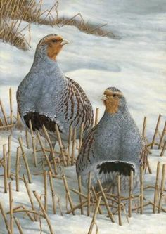 Robert E Fuller - a day in the life of a wildlife artist