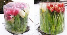 Släng inte dina tulpaner! Titta på Berits isbukett som hyllas på nätet