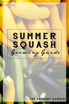Summer Squash Growing Guide
