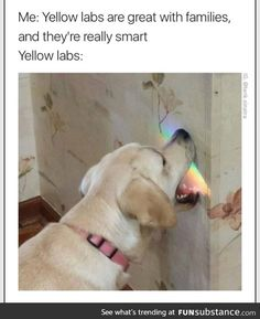Doggo does a smart