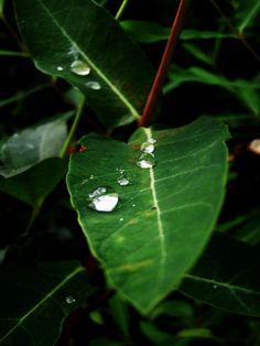 Dewdrop trail