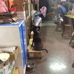 Sit alone. 一人で…🤨 ・ 🦍 180105 ・ #金剛 #米克斯 #狗 #汪星人 #貪吃鬼 #kingkong #mixbreed #mongrel #mutt #puppy #dog #glutton #キングコング #犬 #愛犬 #ワンチャン #わんちゃん #食いしん坊 #킹콩 #강아지 #개 #台湾 #taiwan #台灣 #🇹🇼 #대만 #타이완 #개스타그램 #instadog #dogstagram