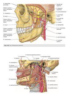 Partes del oido y sus funciones yahoo dating