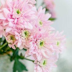 Die 200 Besten Bilder Von Dekoration Blumen Beautiful Flowers