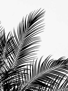 Black Palm Tree Two Poster in the group Prints / Floral at Desenio AB Gold Poster, Blue Poster, Modern Art Prints, Wall Art Prints, Poster Prints, Bild Gold, Desenio Posters, Poster Photo, Image Deco