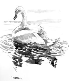 How to Paint a Swan Using Brush, Line & Wash by BobDavies