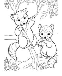 Wild animal coloring page | Bandit face raccoon Coloring page