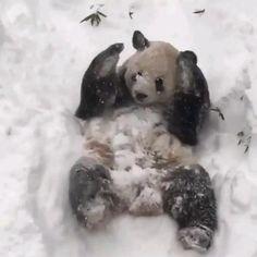 Cute Animal Videos, Cute Animal Memes, Cute Funny Animals, Funny Animal Pictures, Amazing Animals, Animals Beautiful, Cool Pets, Cute Dogs, Cute Panda