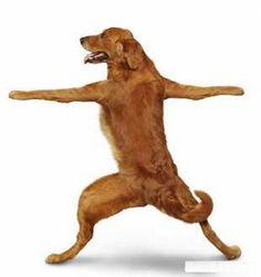 yoga dogs!