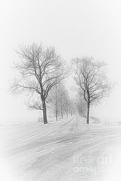 A foggy gray day in December.Fine Art America watermark will not appear on purchased artwork. Days In December, Fine Art America, Digital Art, Design Inspiration, Gray, Wall Art, Finland, Artist, Artworks