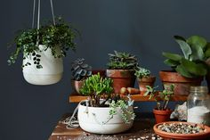 Textured Ceramic and Brass Hanging Planters: Raise your plants. #food52