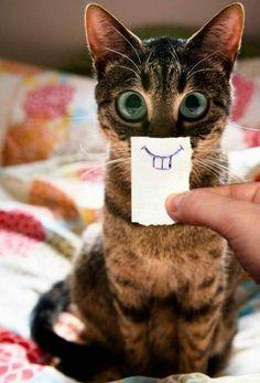 Hello, I'm A Little Rabbit - Funny Videos - Funny Pictures - Vicces cicák - Cats Cute Funny Animals, Funny Animal Pictures, Cute Cats, Funny Cats, Funny Tiger, Cats Humor, Cat Shirts, Cat Gif, Cat Memes