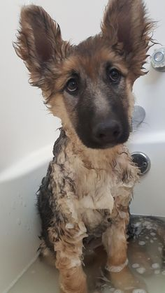 Just wait until I get out of the tub, I am going to make you pay.