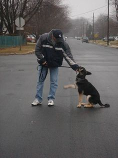 Advice On Improving Your Dog's Temperment Through Training *** Click image for more details. #DogsTraining