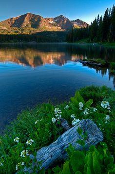 Lake Irwin Wildflowers by Mike Berenson - Colorado Captures, via Flickr