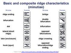 fingerprint diagram worksheet - Google Search | Home school ...