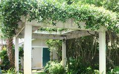 confederate Jasmine on pergola Cedar Pergola, Pergola Swing, Backyard Pergola, Pergola Shade, Pergola Carport, Steel Pergola, Jasmine Plant, Jasmine Vine, Building A Pergola