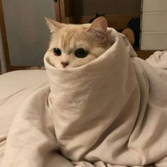 Cute Kittens, Cute Baby Cats, Cute Little Animals, Cute Funny Animals, Cats And Kittens, Funny Cats, Fluffy Kittens, Fluffy Cat, Meme Chat