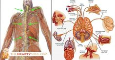 Image of This Nerve Touches Almost Every Organ in the Body, Here's How to Use it to REVERSE Inflammation