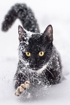 Kitty in snow I Love Cats, Crazy Cats, Beautiful Cats, Animals Beautiful, Kittens Cutest, Cats And Kittens, Animals And Pets, Cute Animals, White Cats