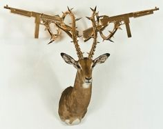 branded taxidermy by peter gronquist