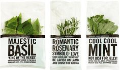 Waitrose Herbs - Lost At E Minor: For creative people