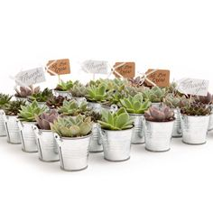 The Succulent Source 2 in. Wedding Event Rosette Succulents Plant with Tin Metal Pails and Thank You Tags The Succulent Source 2 in. Rosetten-Sukkulentenpflanze mit Zinn-Metalleimern und Dankeschön-Tags – The Home Depot Types Of Succulents, Planting Succulents, What A Nice Day, Succulent Wedding Favors, Rustic Wedding Favors, Mexican Wedding Favors, Disney Wedding Favors, Woodland Wedding, Bridal Shower Decorations