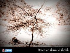Desert on sharm el sheikh - Egypt