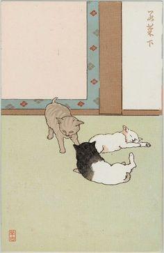 襖 cat