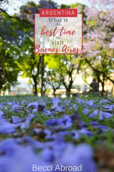 5 reasons November is the best time to visit Buenos Aires - Becci Abroad Travel Advice, Travel Tips, Travel Articles, Group Travel, Family Travel, South America Travel, Activities To Do, Plan Your Trip, Travel Inspiration