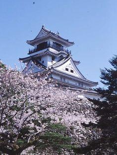 Kochi castle, pretty Sakura 高知城 桜の名所
