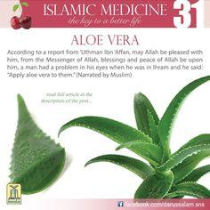 Aloe vera Islam Hadith, Islam Muslim, Islam Quran, Allah Islam, Alhamdulillah, Islamic Teachings, Islamic Quotes, Islamic Msg, Islam And Science