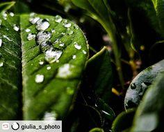 #photo #photoshoot  #fotografia #giuliasphoto