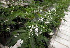 Medical marijuana group wants recreational expansion  http://www.mohavedailynews.com/news/medical-marijuana-group-wants-recreational-expansion/article_14d9e0d8-625b-11e4-8858-a70545fbfabd.html … #medicalmarijuana #cannabis #dabs #THC
