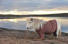 Lil Shetland