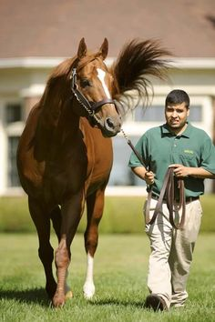I love this picture of Curlin...looks very majestic and stunning as always!