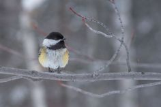 Hey There by Lee Bodson on Bird, Nature, Photography, Animals, Birds, Naturaleza, Photograph, Animales, Animaux