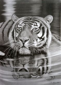 Giving Life To Your Pencil Art: 45 Realistic Drawings Pencil Drawings Of Animals, Realistic Pencil Drawings, 3d Drawings, Amazing Drawings, Amazing Art, Drawing Animals, Drawings Of Tigers, Drawing Faces, Beautiful Drawings