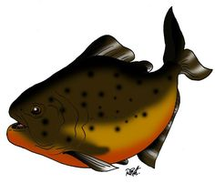 .. Clipart, Bicycle Helmet, Fish, Hats, Animales, Hat, Pisces, Cycling Helmet